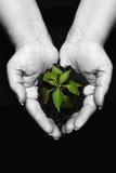 fött plantera nytt Royaltyfri Bild