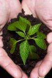 fött plantera nytt Royaltyfria Foton