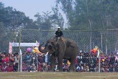 Fútbol del elefante - festival del elefante, Chitwan 2013, Nepal Fotos de archivo libres de regalías