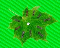 Fútbol del juego de las hormigas en la hoja verde imagen de archivo