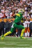Fútbol del NCAA - Oregon en el estado de Oregon Fotos de archivo libres de regalías