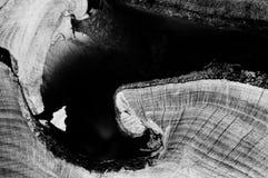 Fût noir et blanc pour le fond photographie stock libre de droits