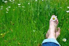Füße auf einer Blumenwiese Stockfotografie