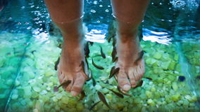 Füße Badekur mit Fischen stock footage