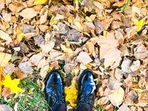 Füße in den schönen schwarzen ledernen glatten glatten Schuhen auf Gelbem und Rot, braunfarbiger natürlicher Herbstlaub stockfotografie