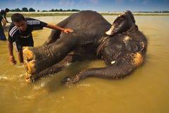 Füße des waschenden Elefanten während des Bades im Fluss Stockfotografie