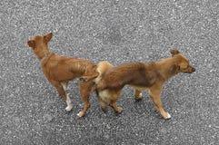 Fügende Hunde Lizenzfreies Stockfoto