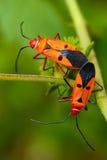 Fügende Insekte lizenzfreie stockfotografie