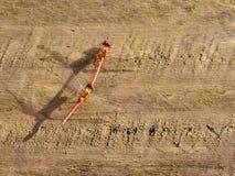 Fügende meadowhawk Libellen Lizenzfreies Stockfoto