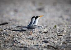 Fügende Paare Abstreicheisen auf dem Strand Stockfoto