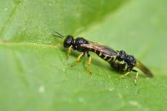 Fügende Wespen Stockfoto