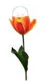 Fühler umgegestaltet mit Tulpe stockfoto