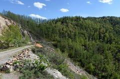 Führen Sie Chike-Taman Die alte Straße der Chuysk-Fläche Berg Altai Spirkebäume und Tannenbäume Lizenzfreie Stockfotografie