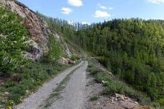 Führen Sie Chike-Taman Die alte Straße der Chuysk-Fläche Berg Altai Spirkebäume und Tannenbäume Stockfotografie