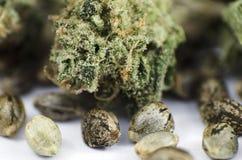 Führen Sie Nahaufnahmeansicht von medizinischen Marihuanasamen und -knospe einzeln auf Lizenzfreies Stockfoto