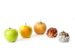 Fünf Äpfel in den verschiedenen Stadien des Zerfalls Stockfotografie