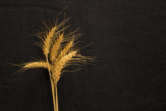 Fünf cirn Kornspitze auf Hintergrundbeschaffenheit Stockbilder