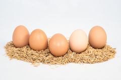 Fünf Eier mit Hülsen Lizenzfreie Stockfotos