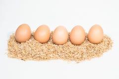 Fünf Eier mit Hülsen Stockfoto
