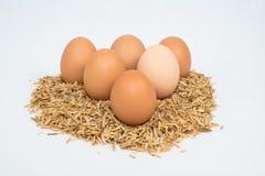 Fünf Eier mit Hülsen Stockbild