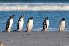 Fünf Gentoo-Pinguine ausgerichtet durch die Brandung Stockfotos