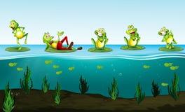 Fünf grüne Frösche im Teich lizenzfreie abbildung