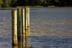 Fünf hölzerne Posten in einem See lizenzfreie stockbilder