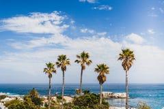 Fünf hohe Palmen, die in einem idyllischen Vorort stehen stockfotos