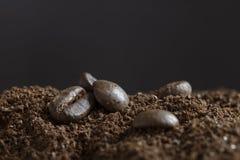 Fünf Kaffeebohnen in coarsed Kaffee lizenzfreies stockbild
