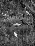 Fünf Kakadus lizenzfreie stockfotografie