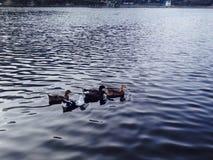 Fünf kleine Enten lizenzfreie stockfotografie
