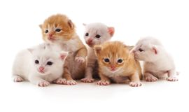 Fünf kleine Katzen Lizenzfreies Stockfoto