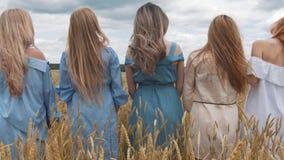Fünf Mädchen mit dem langen blonden Haar auf einem Gebiet des goldenen Weizens stock video