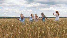 Fünf Mädchen mit dem langen blonden Haar, das über das Weizenfeld läuft Schönes, gesundes Haar stock video