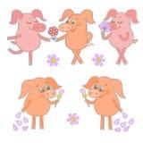 Fünf nette Karikaturferkelaufkleber glücklich und traurige Schweine mit einer Blume in einer Hand Lizenzfreie Stockfotos