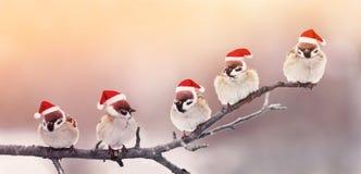Fünf nette kleine Piepmätze, die in den Spaß Weihnachtshüten auf einem Br sitzen Lizenzfreie Stockfotografie