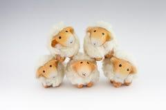 Fünf nette Schafe, die zusammen spielen Stockbild
