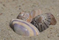 Fünf Oberteile auf dem Sand Stockbild