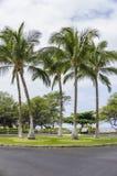 Fünf Palmen, große Insel Stockfotos