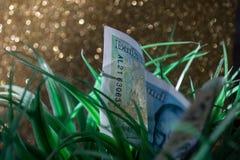 Fünf Pfund in die Natur Lizenzfreies Stockfoto