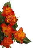 Fünf Rosen lizenzfreies stockfoto