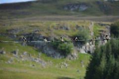 Fünf Schwalben auf einem Draht Stockfoto