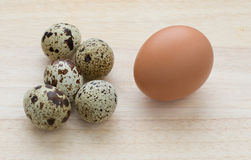 Fünf Wachteln und Eier mit einen Hühnern Stockbild