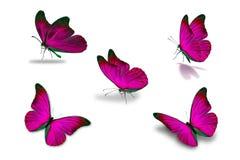 Fünfter rosa Schmetterling Stockbild