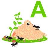 A für Ameisen Scherzt Alphabet Lizenzfreie Stockbilder