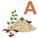 A für Ameisen Scherzt Alphabet Lizenzfreies Stockfoto
