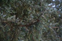 Für Baum stockfotografie