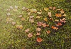 Für die Liebe des Herbstes Stockfotografie