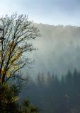 Für und des Herbstes bunte Blätter im Wald Lizenzfreie Stockbilder