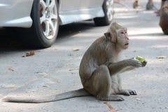 Fütterung Affen Lizenzfreie Stockfotografie